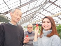 ニッケ銀羊苑 荒川 「春の味覚満喫!イチゴ狩りツアー」の画像