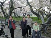 ニッケふれあいセンター犬山 「やっぱり外出最高!!~お花見第2弾~」の画像