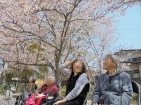 ニッケあすも加古川 「4月のご報告 お花見散歩」の画像