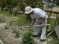 ニッケつどい加古川 「畑のお手入れ」の画像