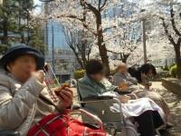 ニッケてとて本町 「平成最後のお花見!」の画像