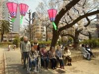 ニッケてとて本町 「近隣の公園まで桜見ぶらり・・・。」の画像