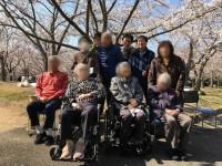 ニッケあすも加古川 「お花見へ行きました♪♪」の画像