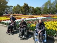 ニッケふれあいセンター今伊勢 「木曽三川公園のチューリップ祭りへ行ってきました!」の画像