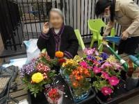 ニッケてとて本町 「春の園芸♪」の画像