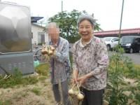 てとてニッケタウン 「玉ねぎ収穫」の画像