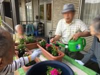 ニッケあすも加古川 「園芸クラブ第2弾」の画像