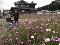 ニッケあすも加古川 「コスモスツアー」の画像