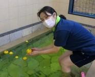 ニッケつどい加古川 「いい風呂の日」の画像