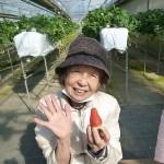 ニッケふれあいセンター今伊勢 「イチゴ狩りに行ってきました!」の画像