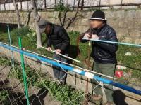 ニッケれんげの家・加古川 「ラディッシュ収穫!」の画像