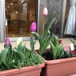 ニッケあすも一宮 「あすもで感じる春」の画像