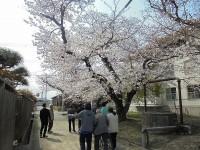 ニッケつどい加古川 「春のウォーキング」の画像