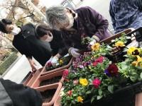ニッケあすも加古川 「冬の園芸活動」の画像