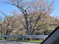 ニッケつどい加古川 「さくらドライブ」の画像