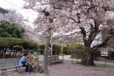 ニッケてとて加古川弐番館 「今日の一枚」の画像
